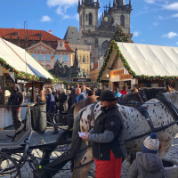spotted horse, church, Prague market