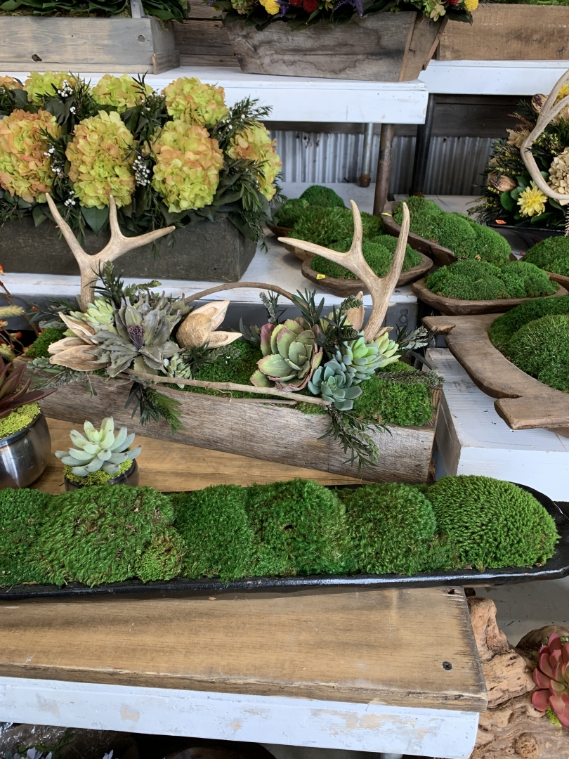 Round Top, succulents, antlers, planters
