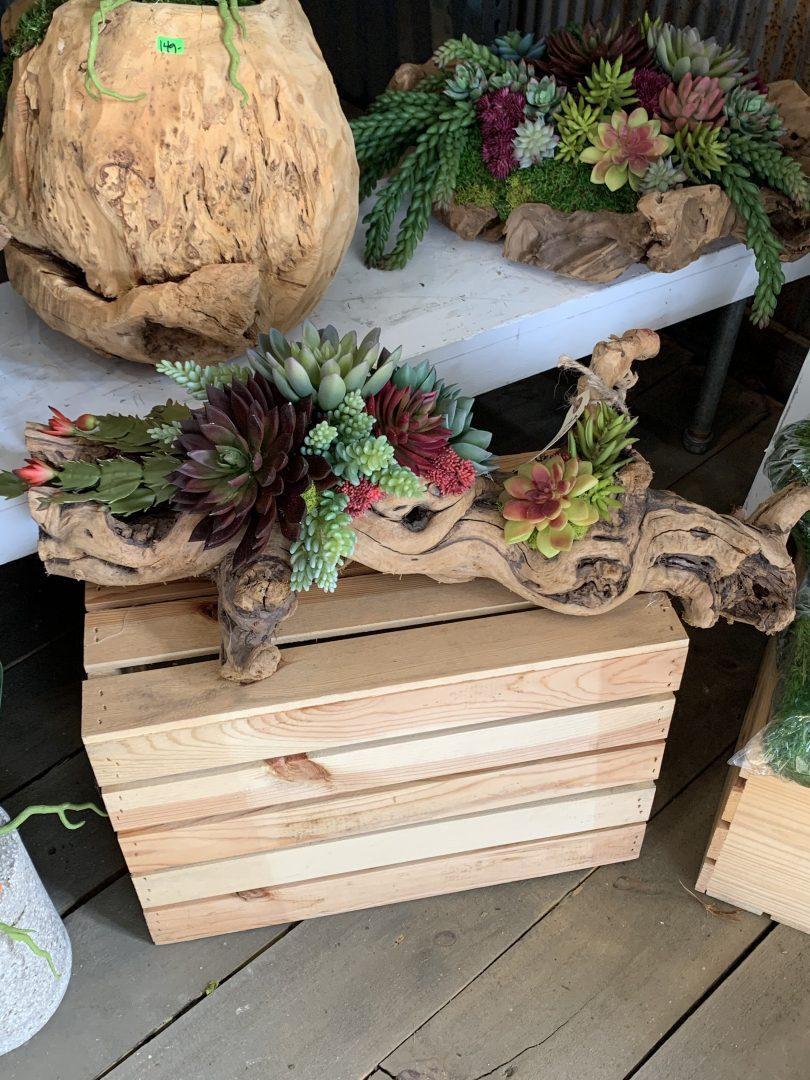 succulents, succulent arrangements